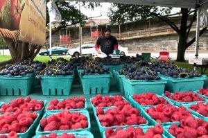 Lanni Orchard fruits